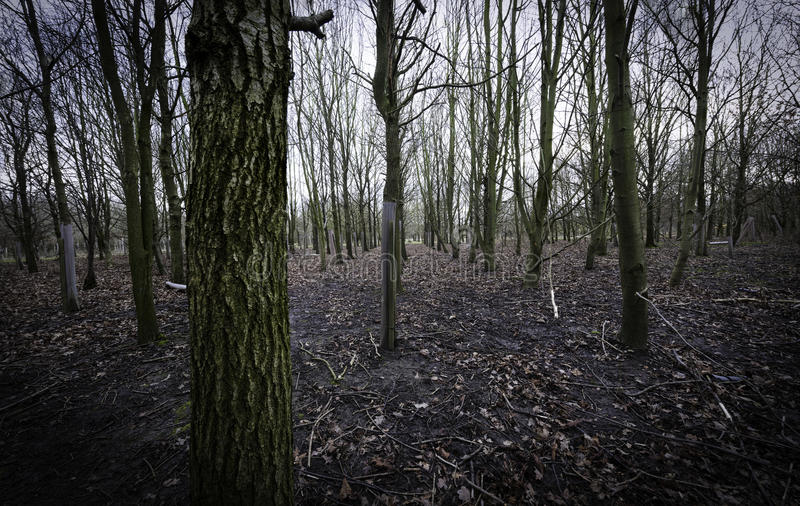 Haute forêt de définition images libres de droits