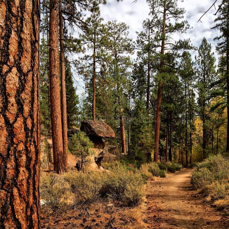 Haute forêt de désert photographie stock libre de droits