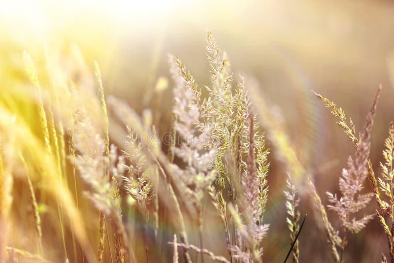 Haute herbe baignée au soleil image libre de droits