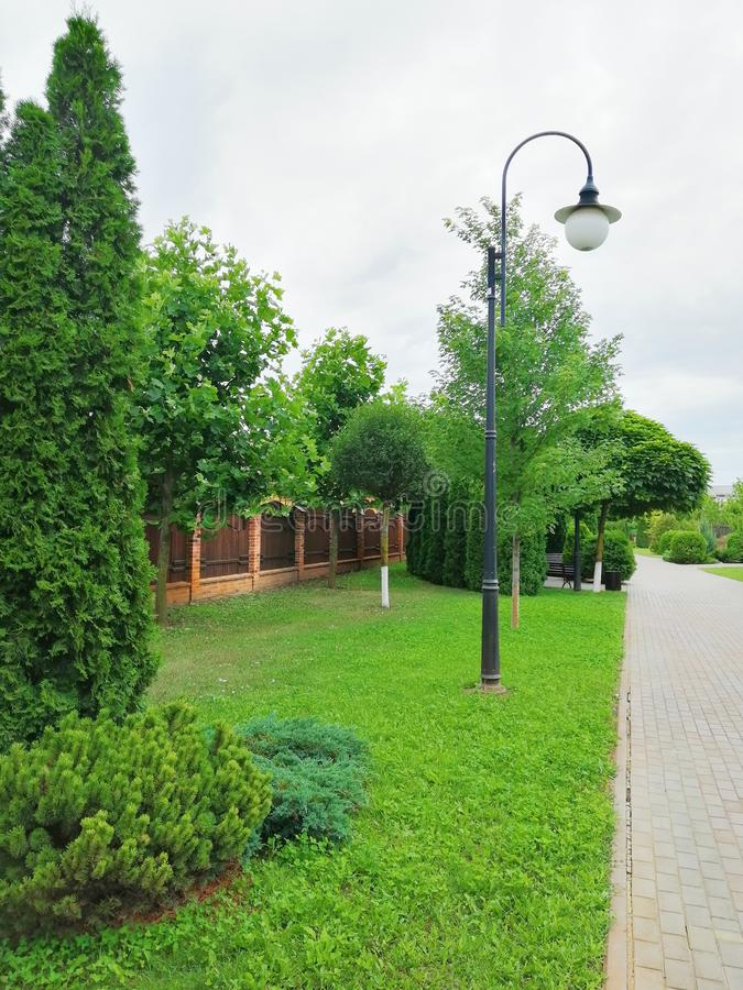 Haute lanterne sur une allée verte image libre de droits