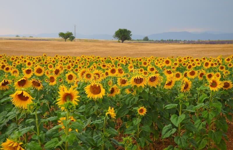 Haute Provence στοκ φωτογραφίες