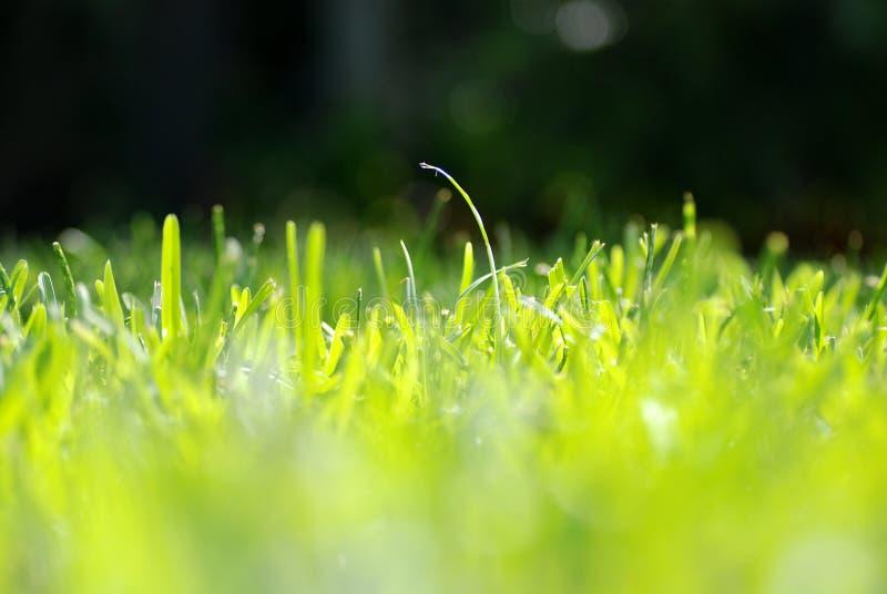 Hauteur d'oeil d'herbe photos libres de droits