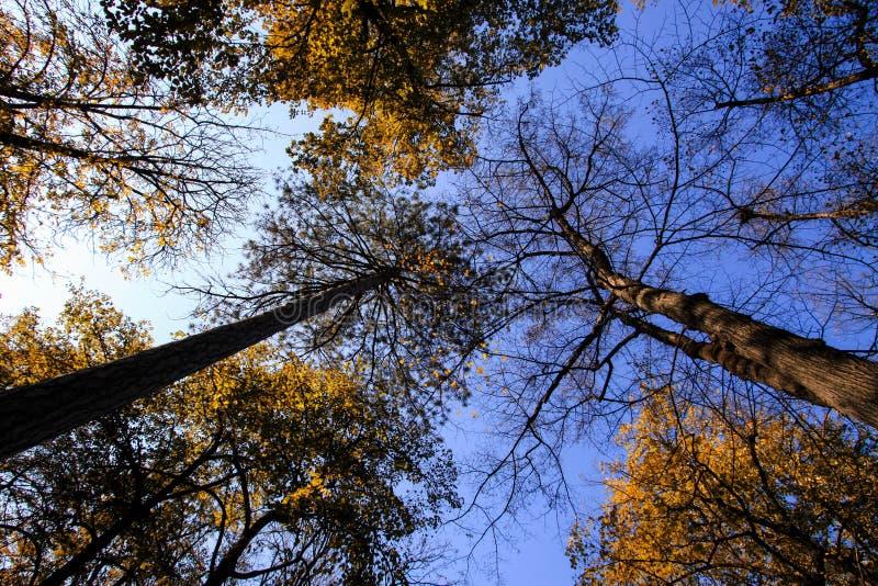 Hauts arbres d'automne photographie stock