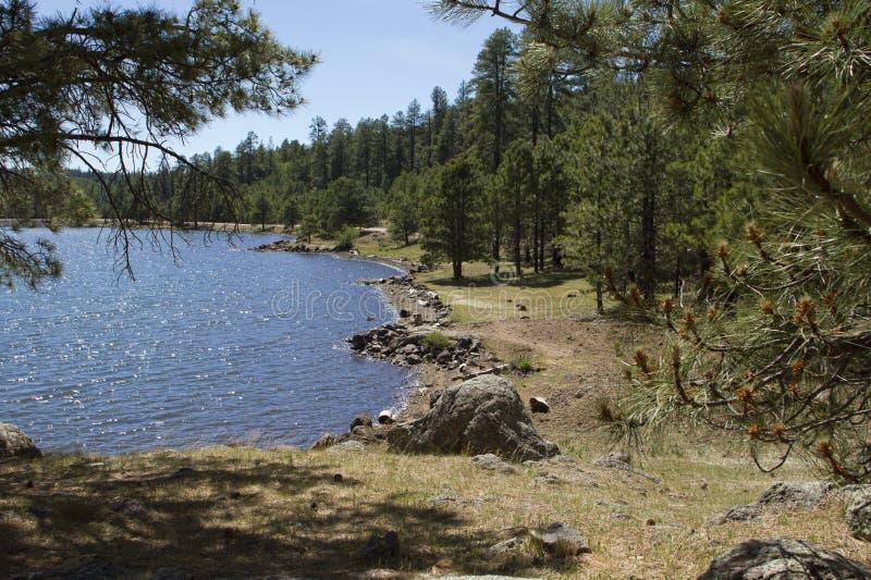 Hauts bois de pays et lac de l'Arizona photographie stock libre de droits
