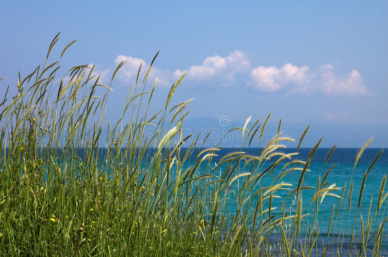 Hauts herbe et nuages images libres de droits