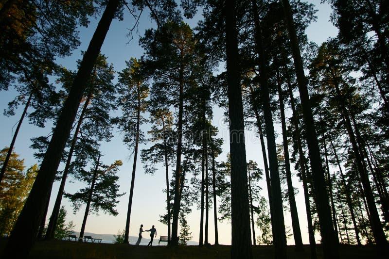 Hauts pinetrees photo stock