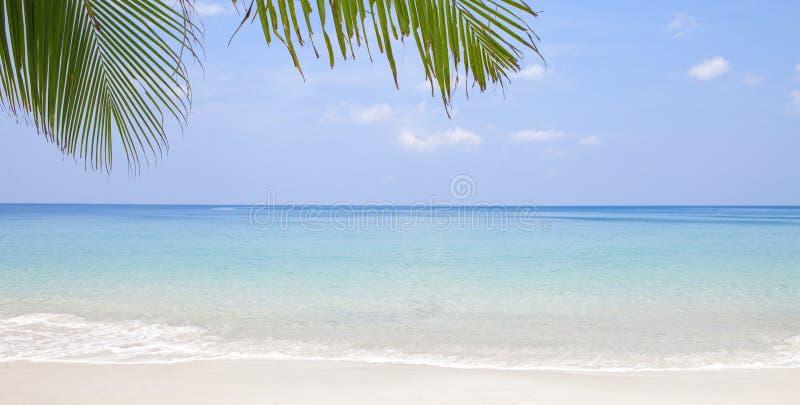 Download Hav arkivfoto. Bild av leaf, resa, maldives, solbränna - 19789694