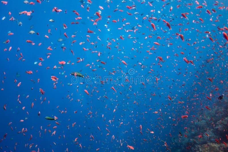 Hav av fisken arkivbild