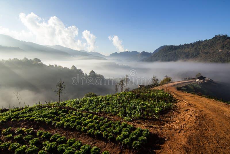 Hav av mist i morgonen royaltyfri foto