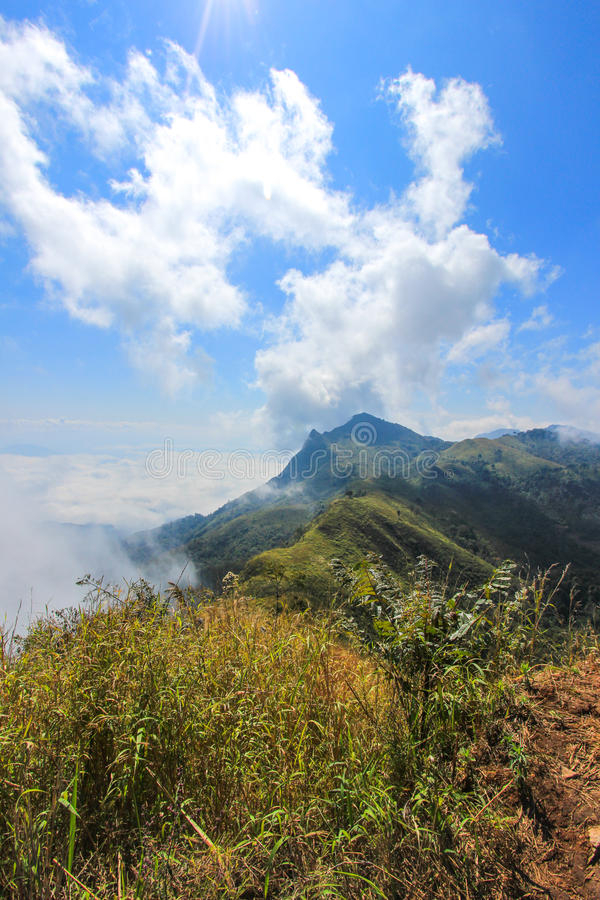 Hav av mist på Doi Pha skarp smak, Chiang Rai, nordliga Thailand royaltyfri foto
