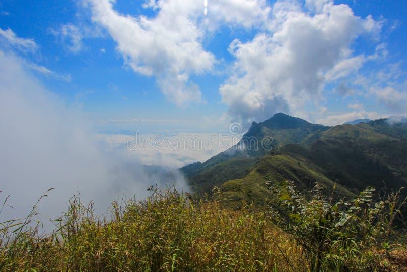 Hav av mist på Doi Pha skarp smak, Chiang Rai, nordliga Thailand royaltyfri bild