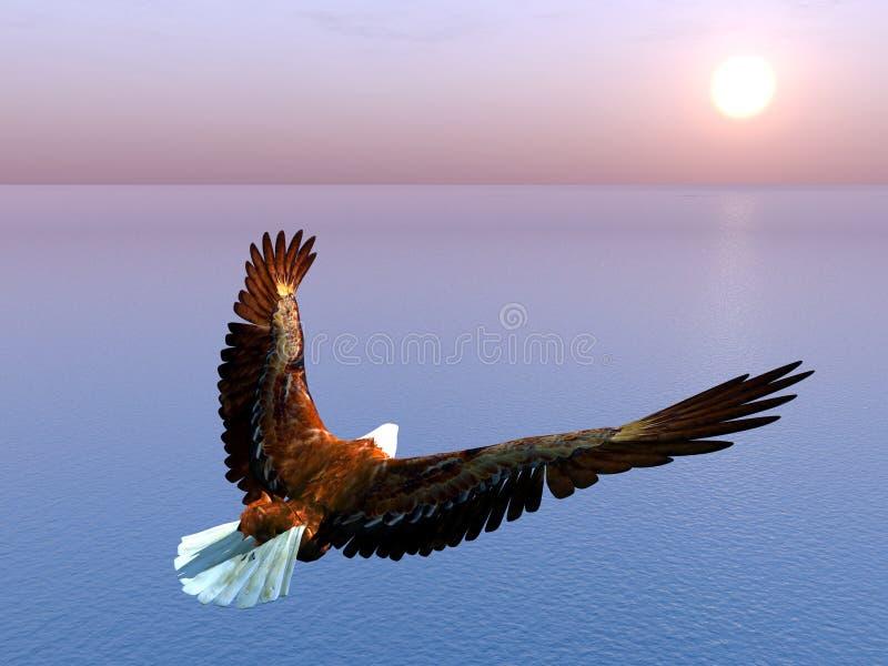 Hav Eagle vektor illustrationer