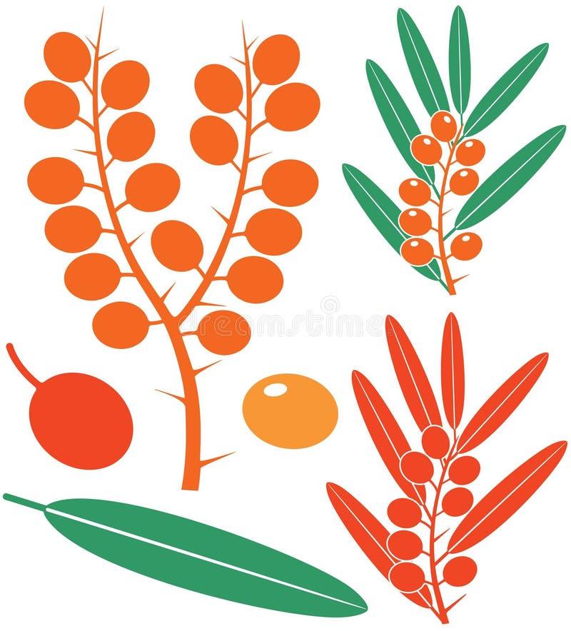 hav för illustration för element för bärbuckthorndesign royaltyfri illustrationer