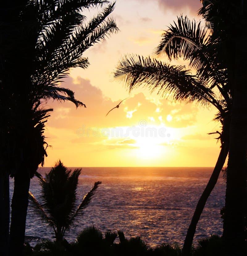 Hav för strand för palmträdsolnedgång tropiskt royaltyfri foto