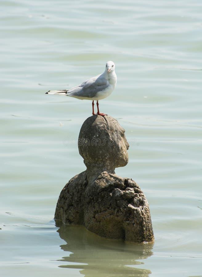 Hav-fiskmås och staty i vatten royaltyfria bilder
