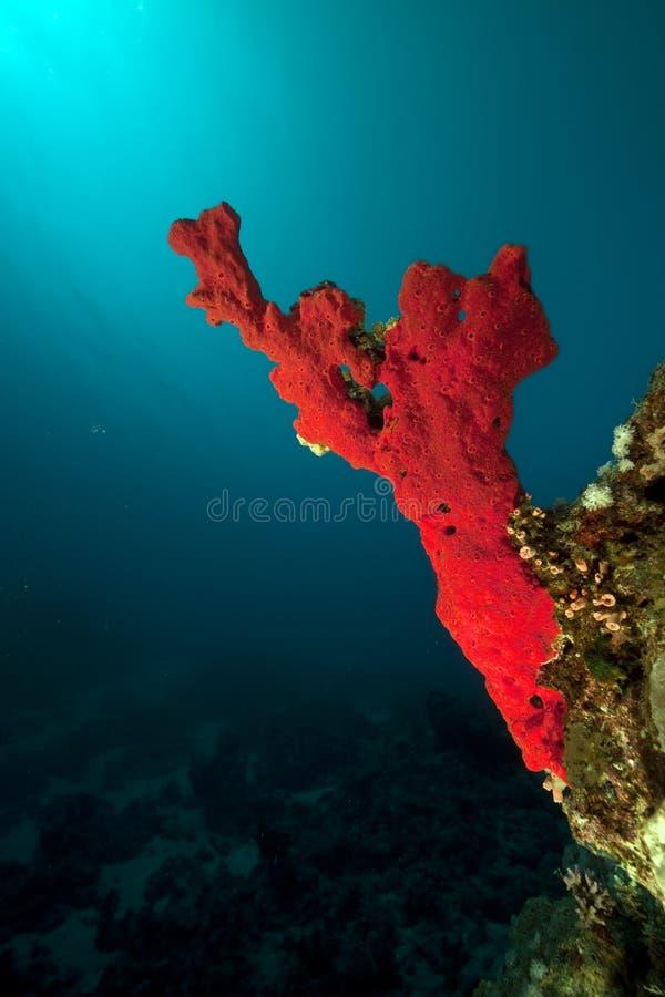 Hav, korall och fisk arkivfoto