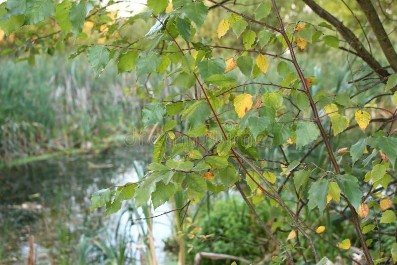 Hav med ett träd fotografering för bildbyråer
