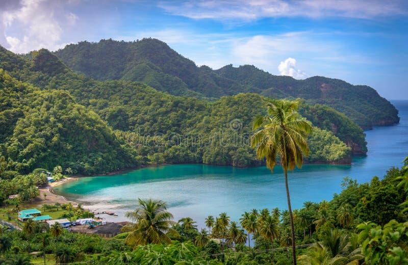 Hav och palmträd i Saint Vincent och Grenadinerna arkivbilder