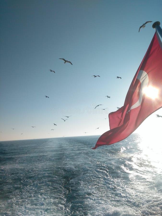 Hav och Seagull royaltyfri fotografi