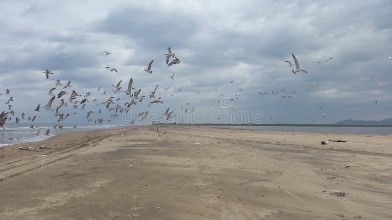 Hav sand, seagull royaltyfri bild
