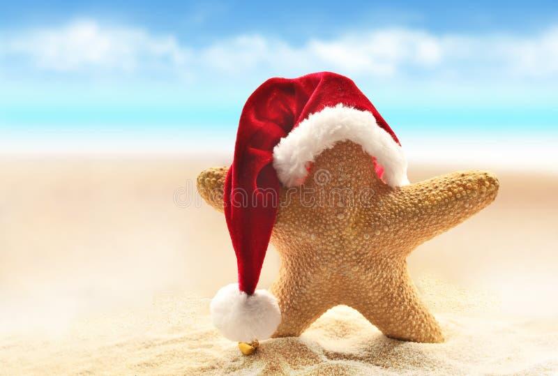 Hav-stjärna i den röda santa hatten som går på havsstranden arkivbild