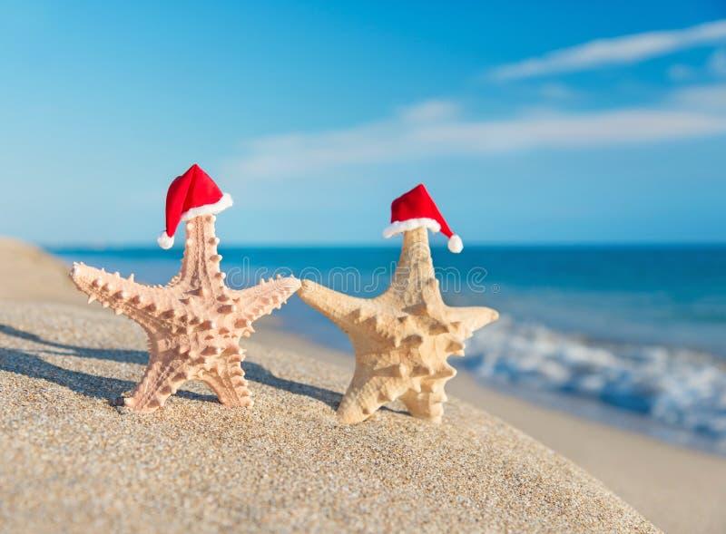 Hav-stjärnor kopplar ihop i santa hattar som går på stranden. Feriebegrepp royaltyfria foton