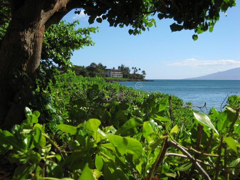 Havaí fotografia de stock