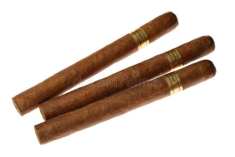 Havana Cigars Set Isolated on White royalty free stock image