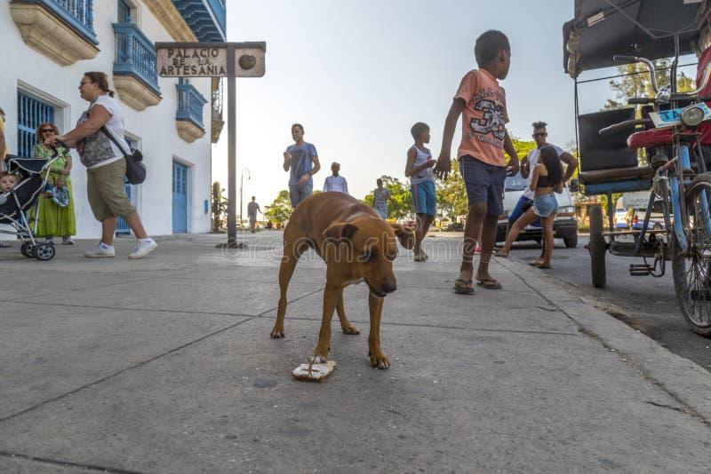 Havana Steet scene-49 lizenzfreie stockfotografie