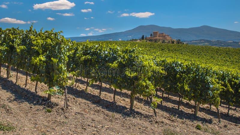 Havande uppsikt över vingårdar för Tuscan slott arkivfoton