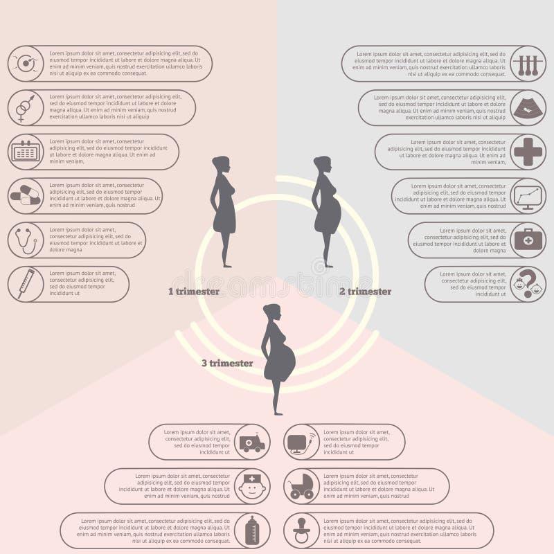 Havandeskap- och födelseinfographics, havandeskapetapper vektor illustrationer