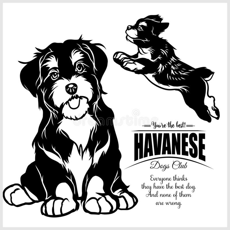 Havanese - T恤杉、商标和模板徽章的传染媒介例证 库存例证