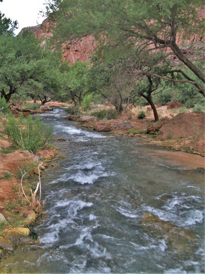 Havasu liten vik i Grand Canyon royaltyfria foton