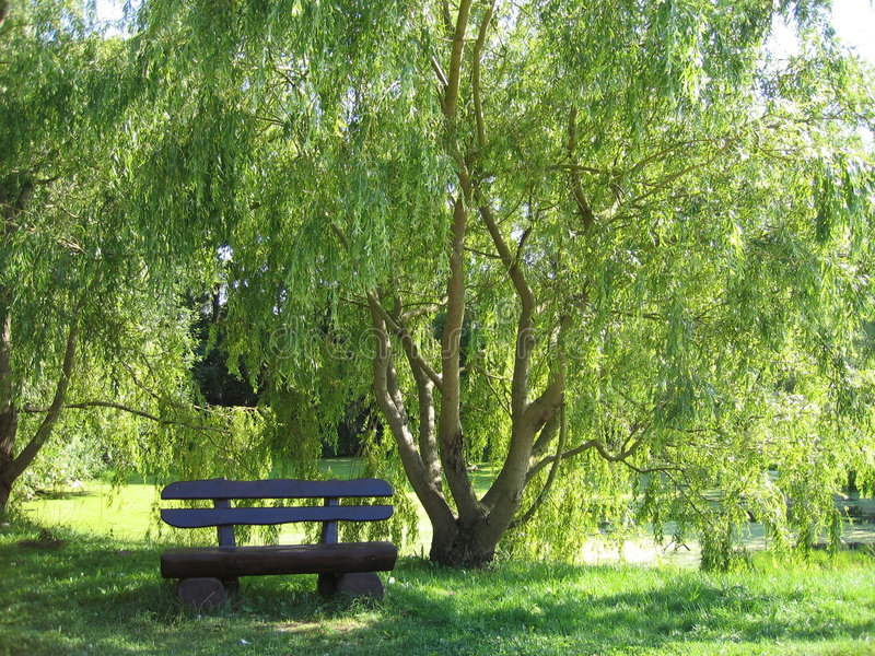 Download Have a break stock photo. Image of trees, sunshine, seating - 15650