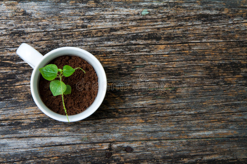 Have a Cup of Nature royalty free stock photography