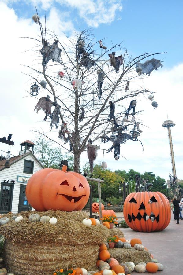 Haven Aventura, Halloween stock fotografie