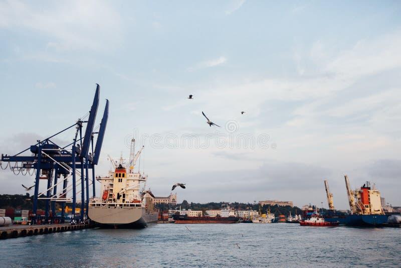 Haven en vliegende zeemeeuwen in de hemel Mooie vreedzame mening Istanboel, Turkije stock foto