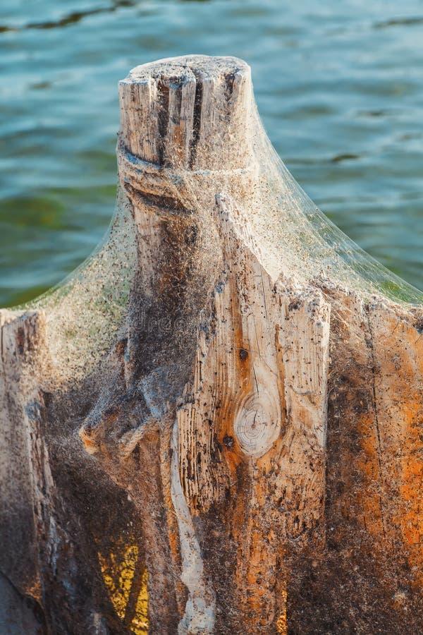 Havenpool in spinneweb stock fotografie