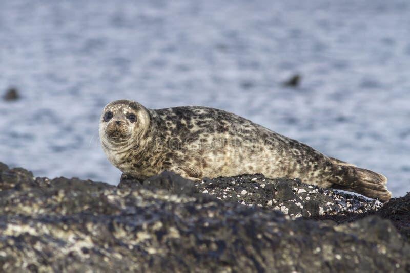 Havenverbinding die op een rotseiland Bering liggen royalty-vrije stock afbeelding