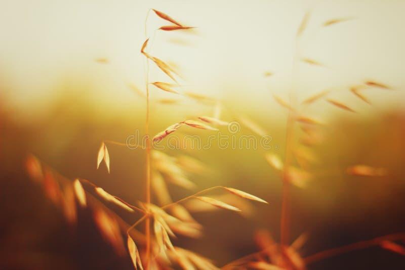 Havergebied in zonsondergang Sluit omhoog mening stock afbeelding