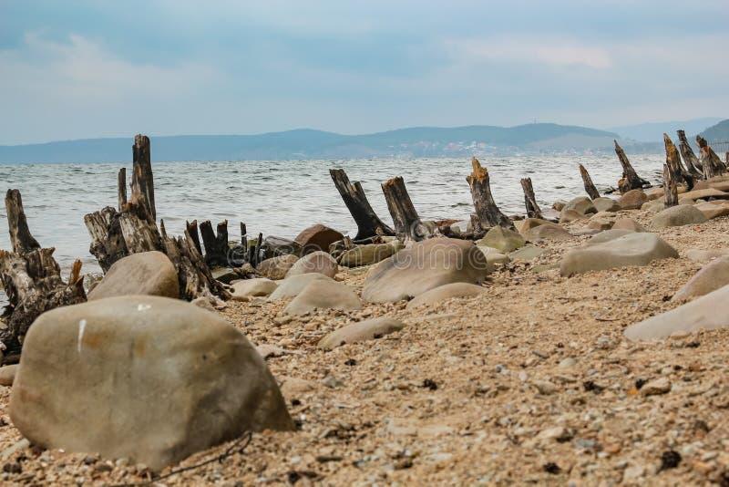 Haveri av träd som kastas på kusten av sjön Turgoyak i Chelyabinsken royaltyfri fotografi