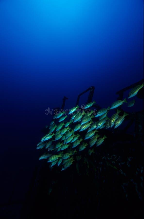 haveri för mauritius silverstjärna royaltyfri bild