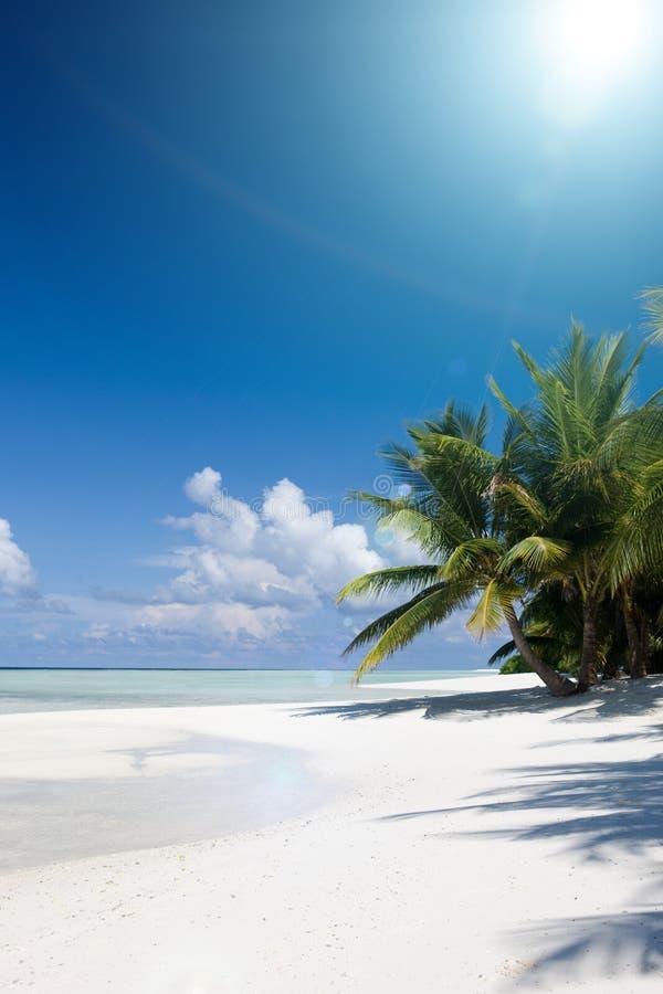 Havet och kokosnöten gömma i handflatan arkivfoton