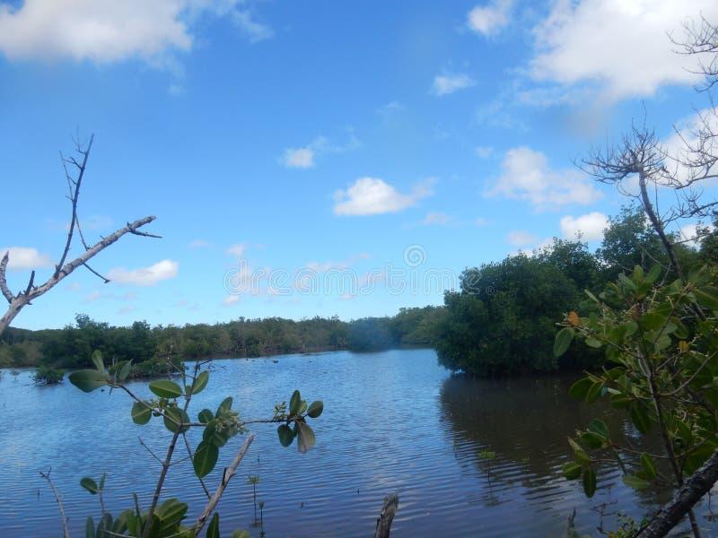 Havet och mangrovarna blandar royaltyfria foton