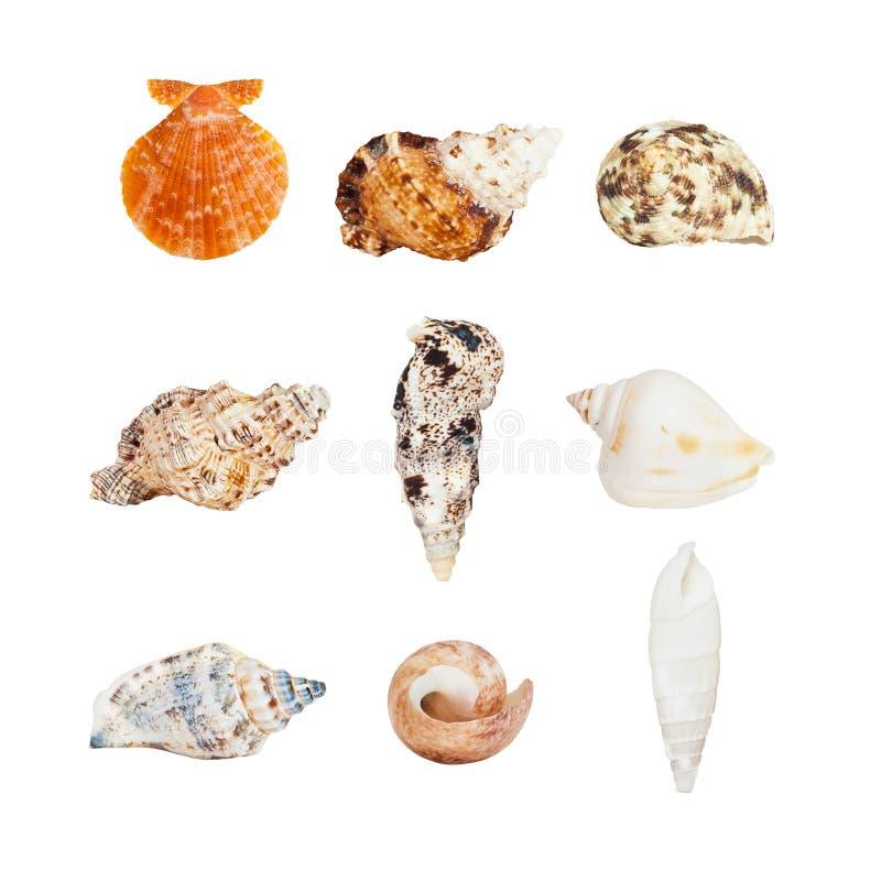 havet shells olikt arkivfoton