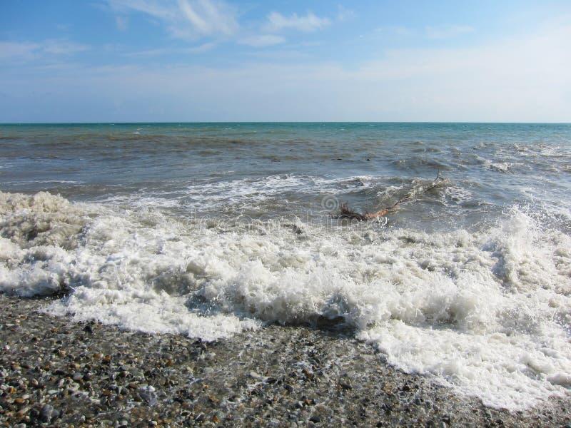 Havet som kommas med för att stötta ett träd arkivfoto