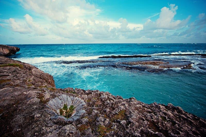 Havet vaggar, rever, färgstänk och vaggar royaltyfria bilder