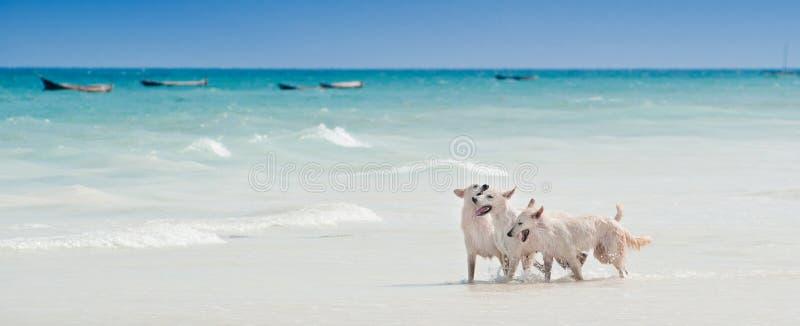Havet vit hundkapplöpning för kalendern för vykortet för designen för landskapet för avkoppling för den soliga dagen för solen fö royaltyfri foto