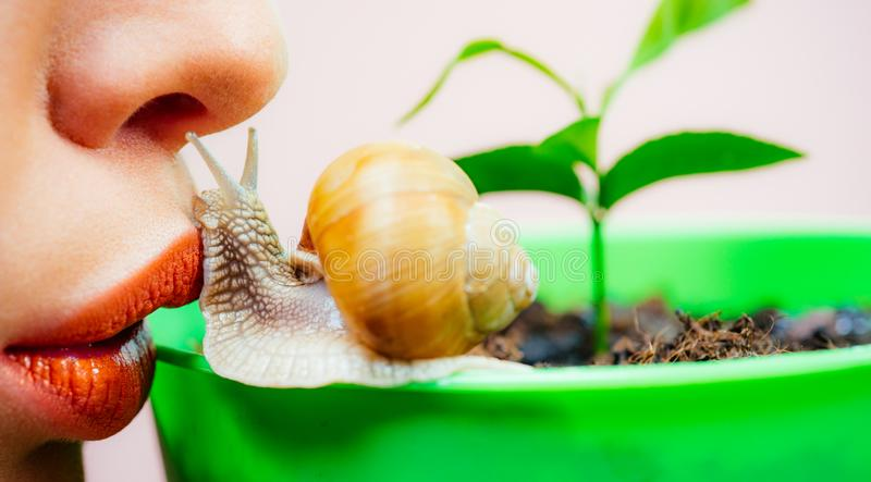 Having fun with adorable snail. Spa and wellness. Cosmetics and snail mucus. Cosmetology beauty procedure. Girl and cute. Snail. Skin care. Massage with snail stock photo