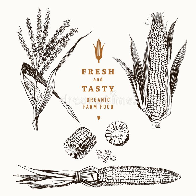 Havre på uppsättningen för majskolvtappningdesign vektor illustrationer